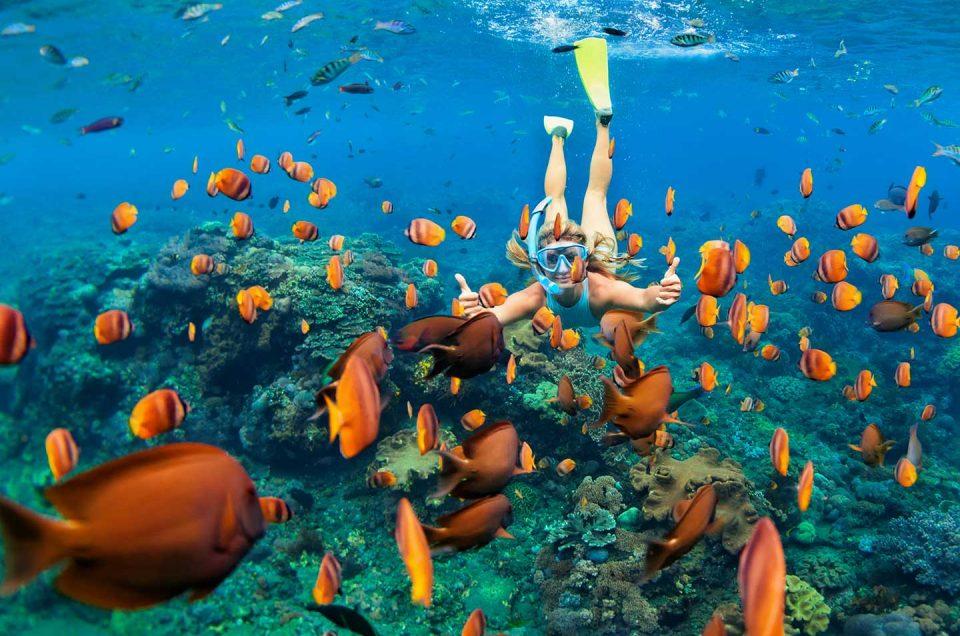 Las 5 mejores calas para hacer snorkel en Alicante