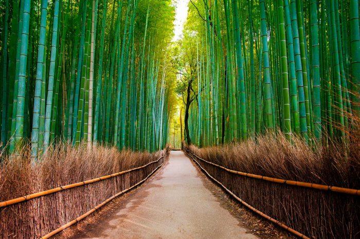 WOW! Vuela a París y Japón desde 261€ trayecto