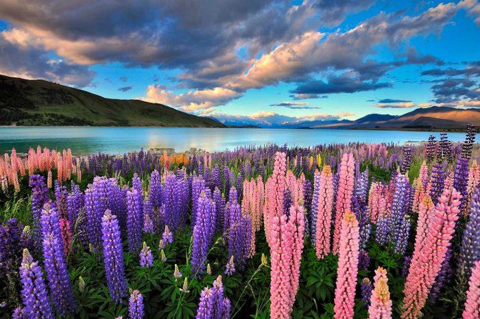 Vuelos a Auckland (Nueva Zelanda) en marzo desde 337€ trayecto