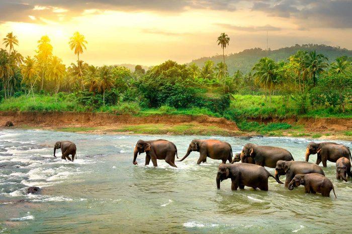 ¡WOW! Vuela a Sri Lanka desde 245€ tray. y Villa desde 13€ p.p.