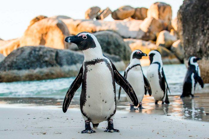 Vuela a Sudáfrica desde 189€ trayecto